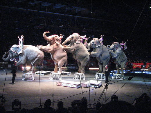 Elephants circus