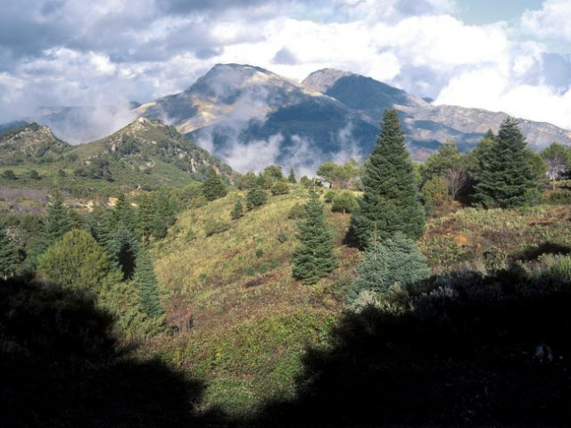 Sierra de las Nieves moves one step closer to becoming national park